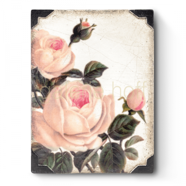 Dickens, Sid - T-464 Gentle Rose